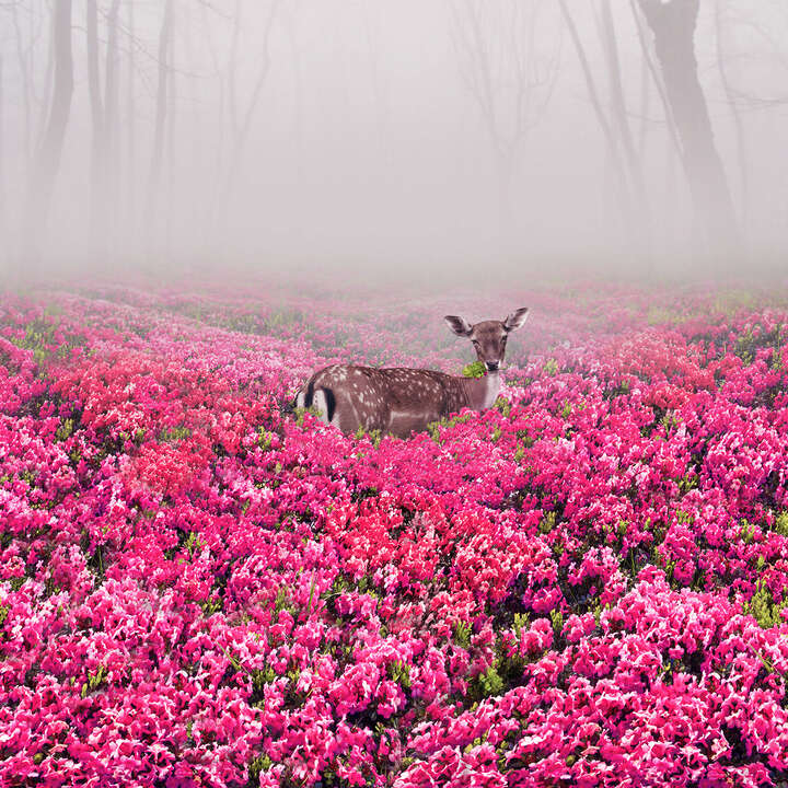 Pink Deer by Robert Jahns