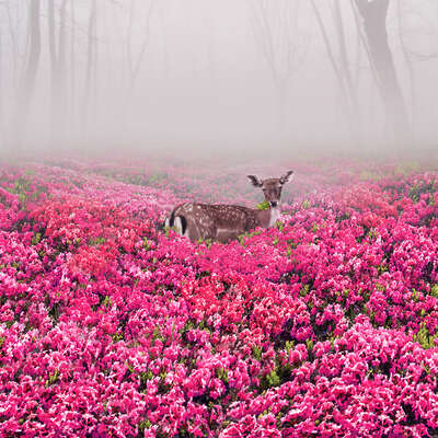 animal wall art:  Pink Deer by Robert Jahns
