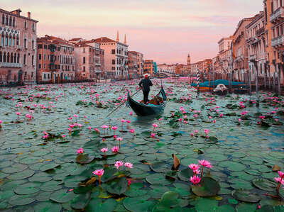 water art photography:  Venice Lotus Flowers by Robert Jahns