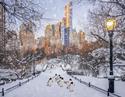 conceptual photography:  Central Park Penguins by Robert Jahns
