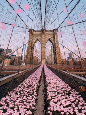 Curated pink artworks: Brooklyn Bridge Tulips by Robert Jahns