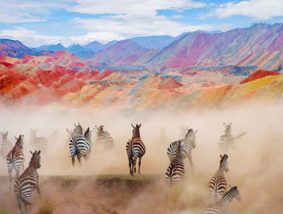 Colorful Zebras von Robert Jahns
