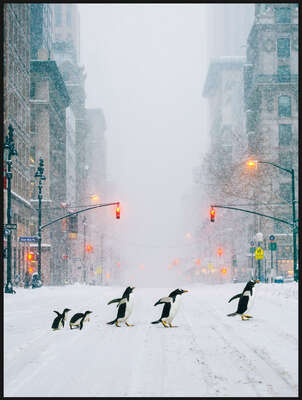 NYC Penguins by Robert Jahns