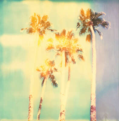 Beach wall art: Palm Springs Palm Trees by Stefanie Schneider