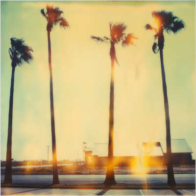 Beach wall art: Palm Tree Restaurant by Stefanie Schneider