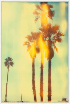 Gifts for couples: Santa Monica Palm Trees II by Stefanie Schneider