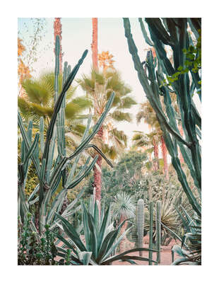 curated cactus artworks: Jardin Majorelle II by Simon Watson