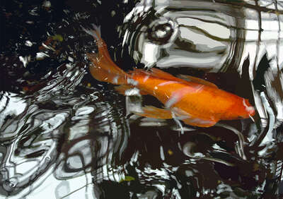 wall art wildlife prints animals  Goldfisch III by Susanne Wehr