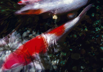 Abstract Wall Art  Koi I by Susanne Wehr